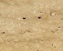 Травертин римский 2580